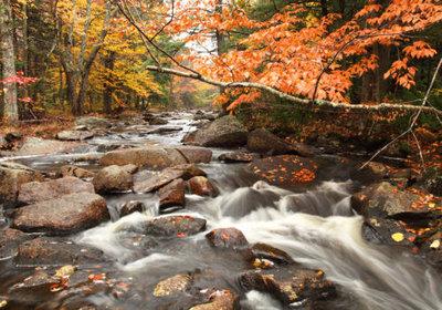 Fotobehang herfstbos met water, nr 381,  400 x 280 cm